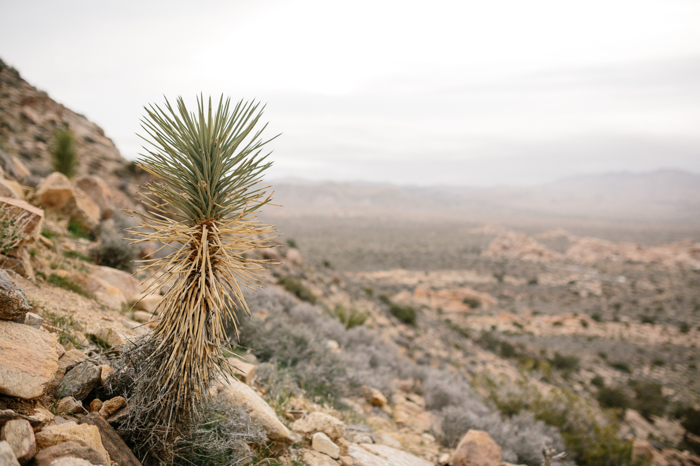 Joshua Tree National Park February 13 - Corrie Mick Photography-30.jpg