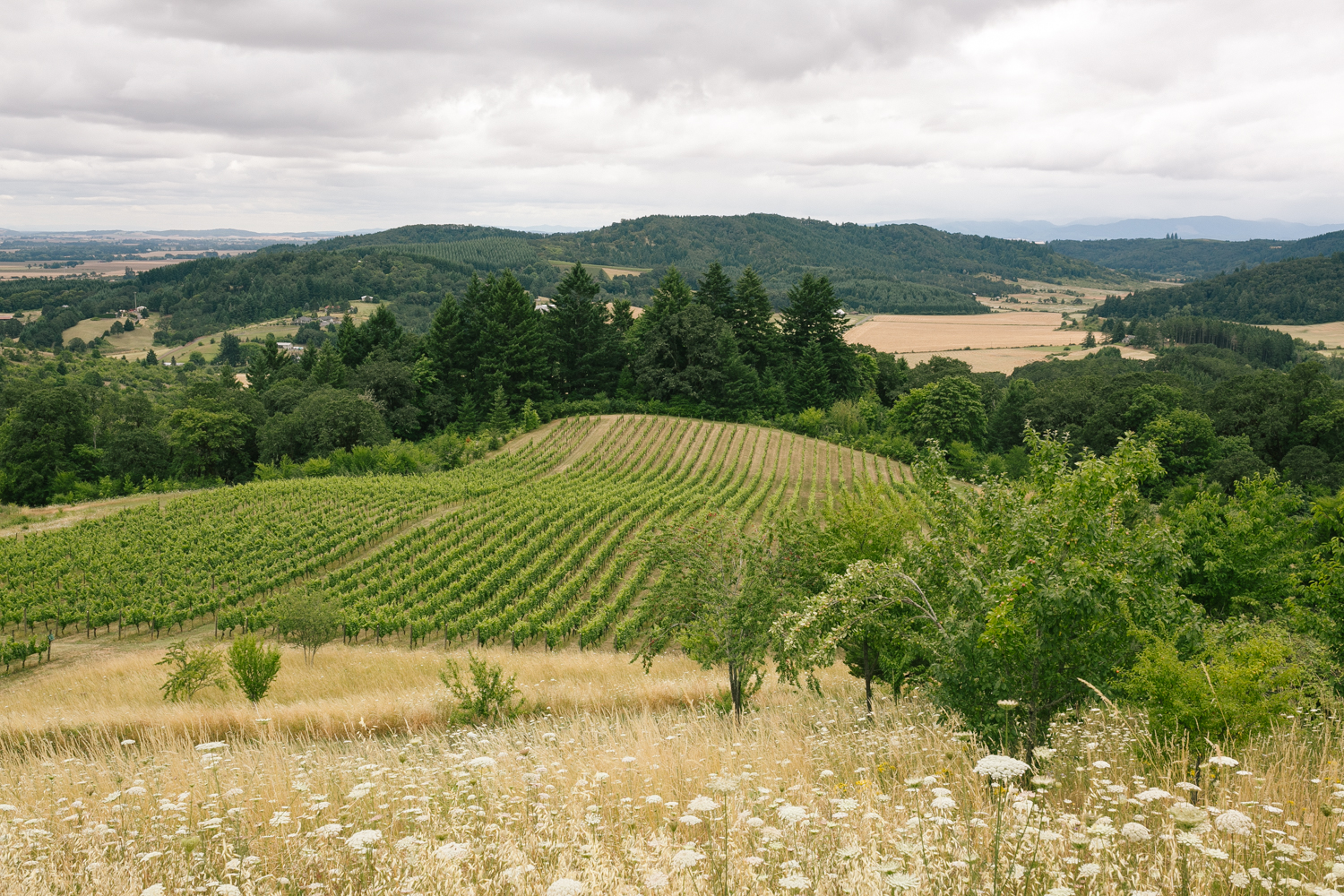Youngberg Hill Vineyard Wedding in Wine Country Oregon - Corrie Mick Photography-239.jpg