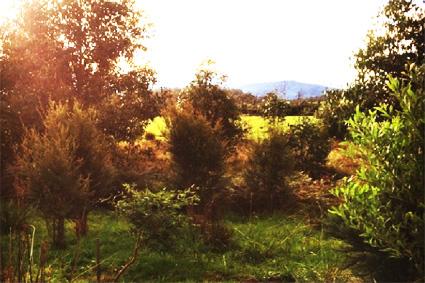 established-trees.jpg