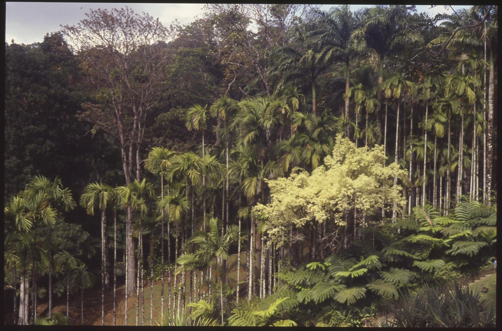 Martinique_film021 copy.jpg