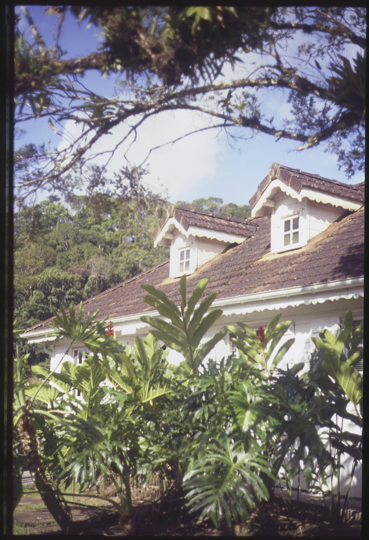 Martinique_film022 copy.jpg