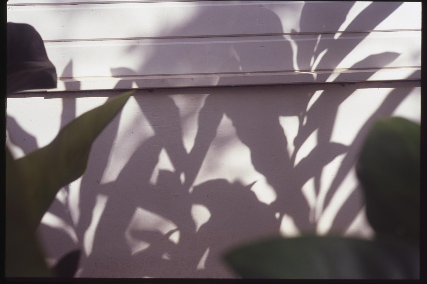 Martinique_film023.jpg