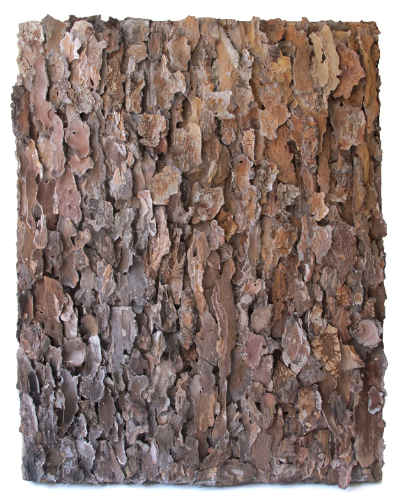 "No Title  tree bark on canvas 22"" x 33"""