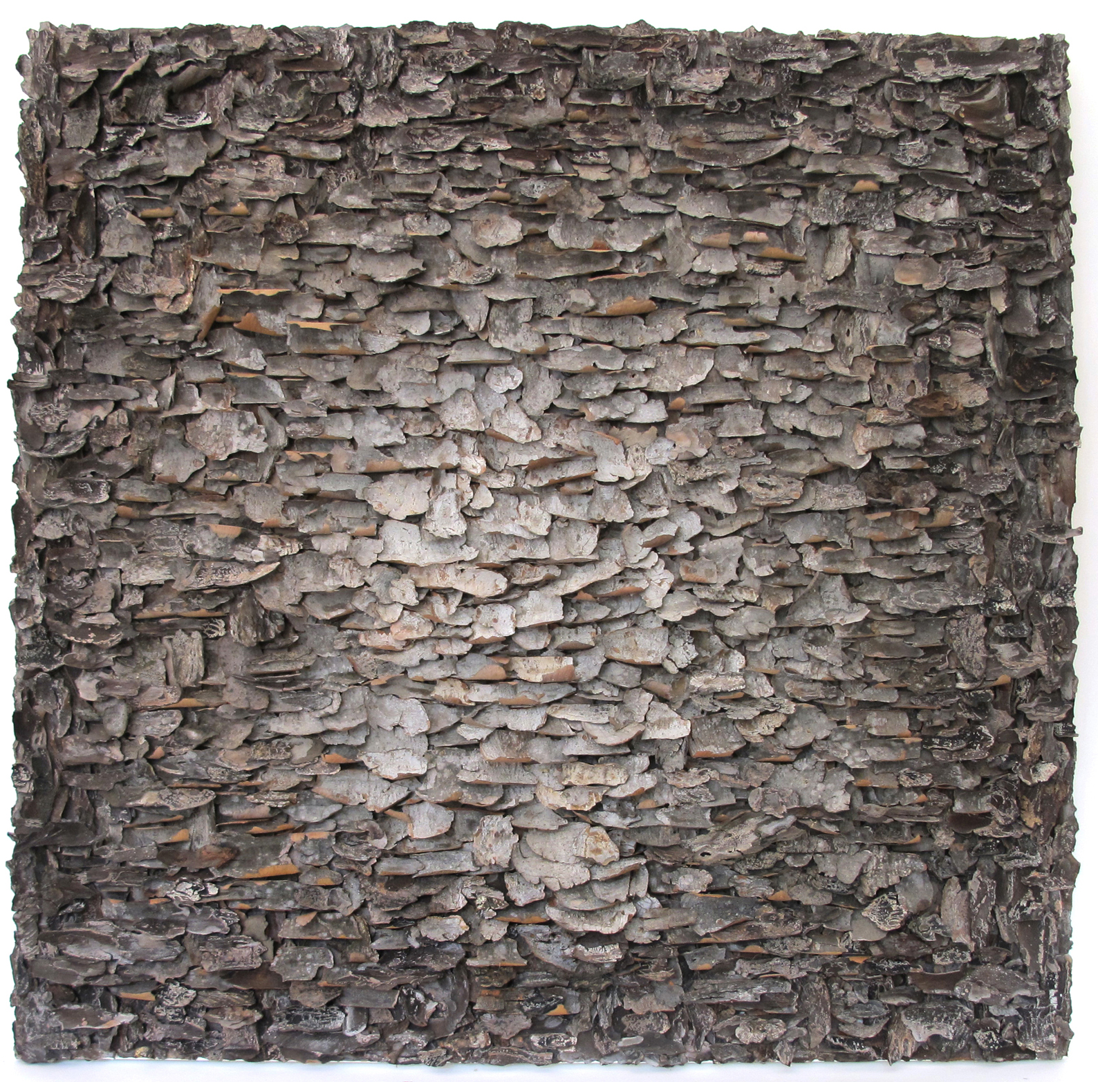 "Moonshine   tree bark on canvas 36"" x 36"""