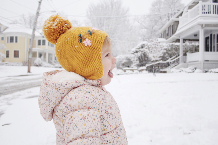 snowbird2.jpg