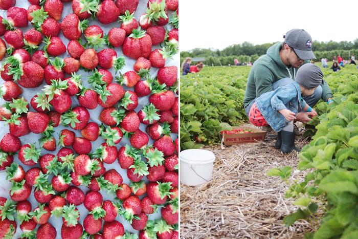 strawberries4.jpg