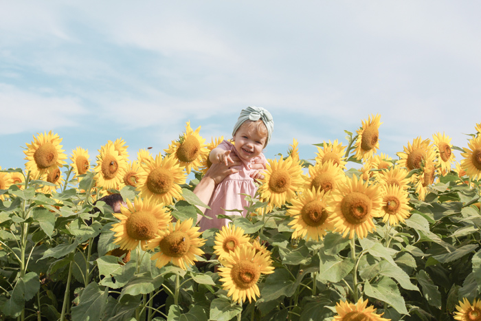 2018sunflowers6.jpg