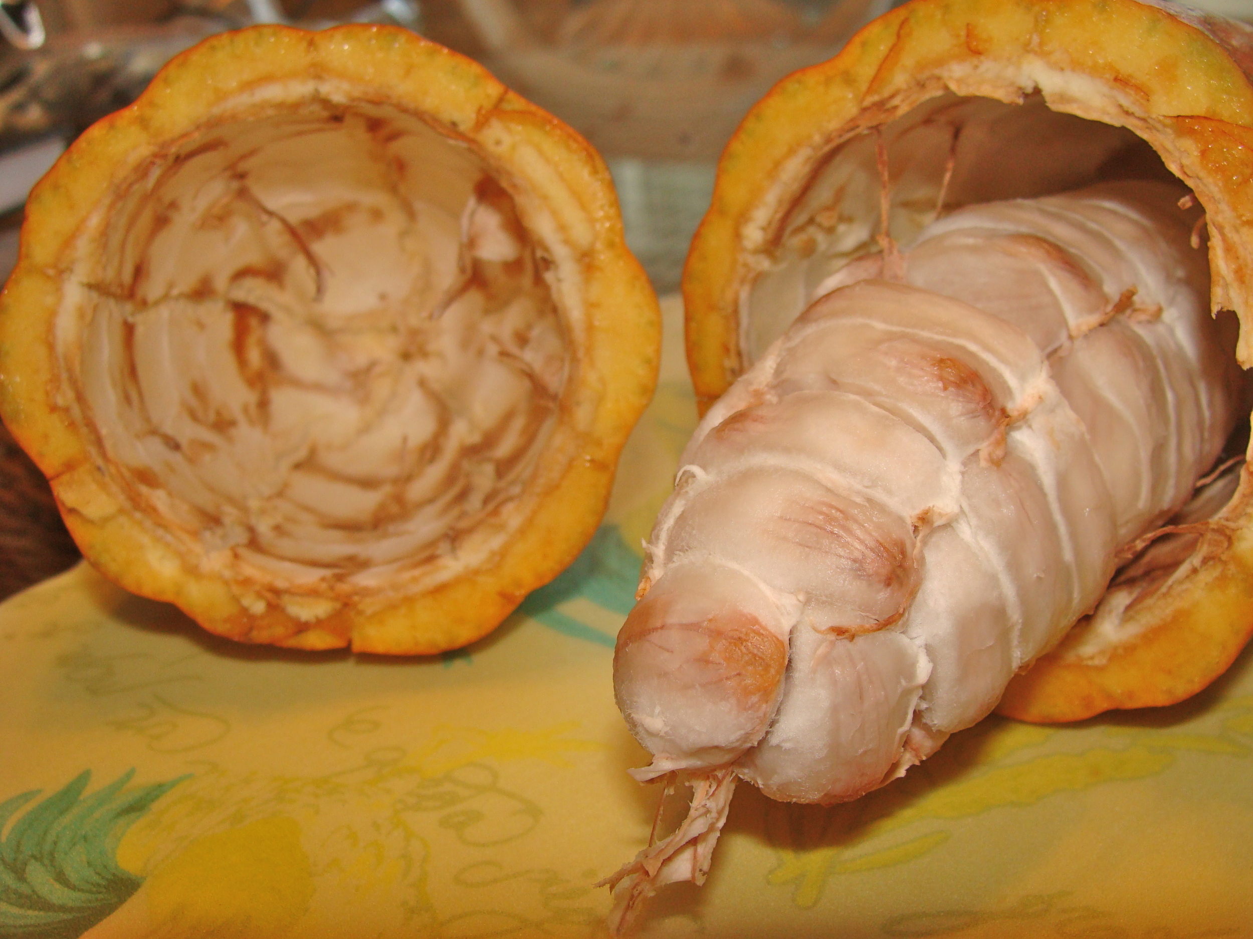 The Dissected Cocoa Pod