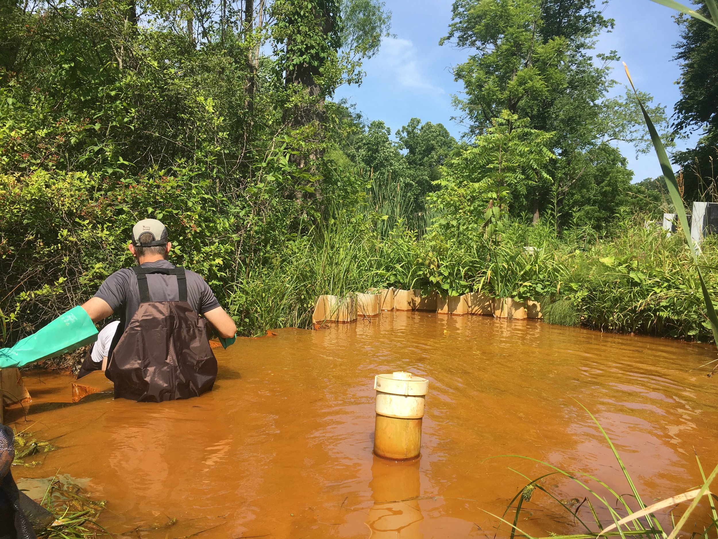 Extracting samples from stream catch of iron and acid mine drainage in Sulfur Springs Hollow, Ohio