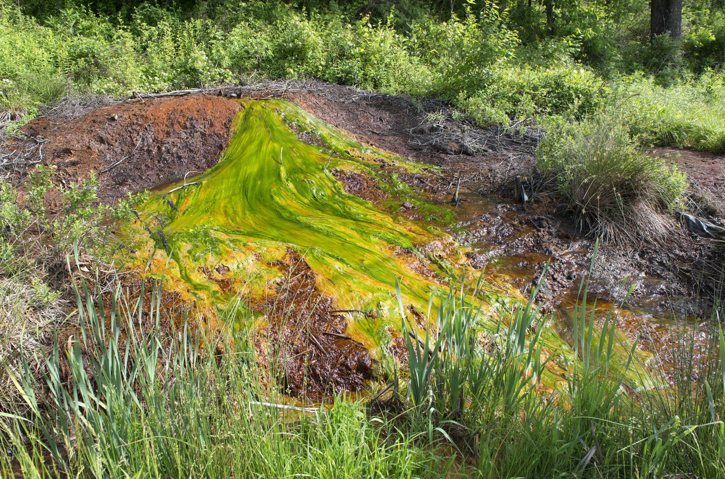 Bubbling acid mine seep at Carbondale, Ohio red and orange is iron oxide deposits, green streaks are bacteria and algae