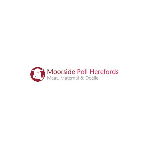 Moorside-Poll-Herefords.jpg