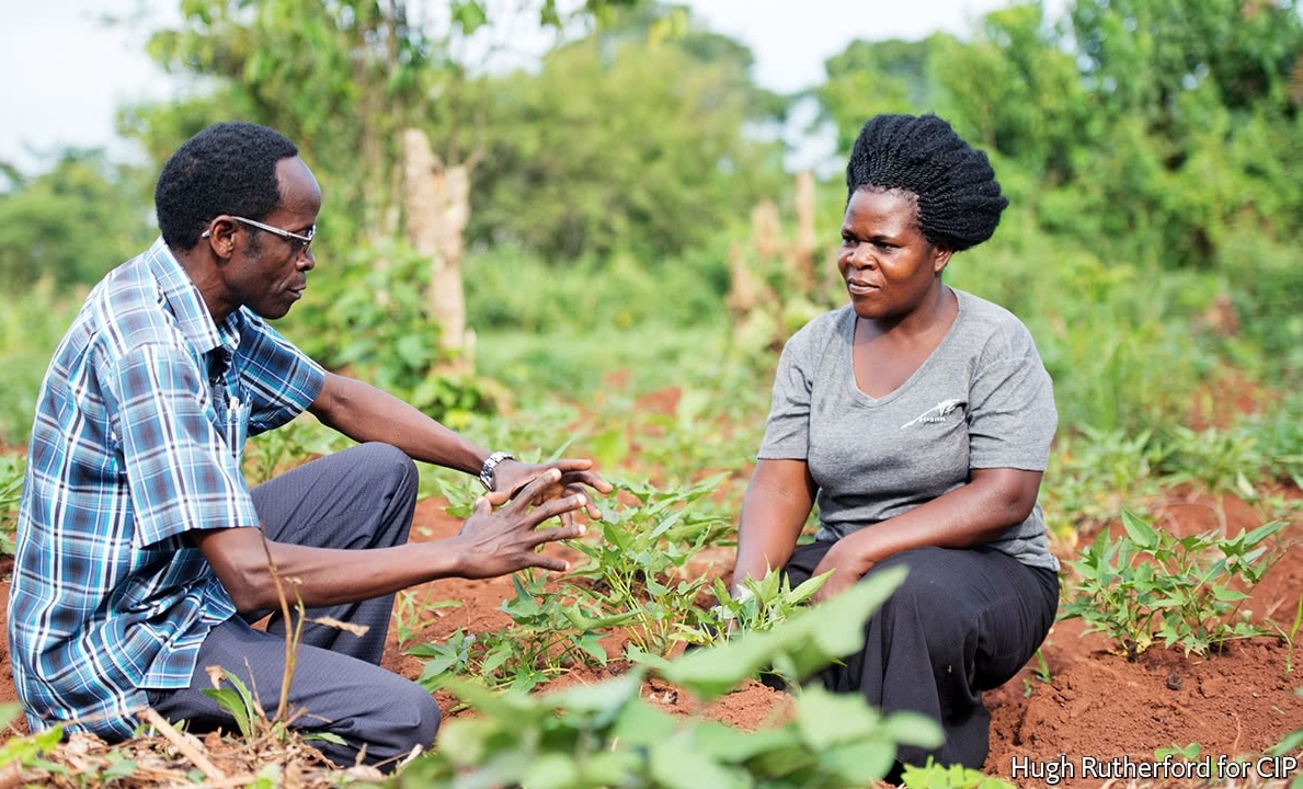 Farmer-to-farmer exchanges - The Borlaug Training Foundation implements farmer-to-farmer exchanges to link farmers to their counterparts in other countries and to researchers, so that they can learn from each other and discover new ideas to try on their farm.