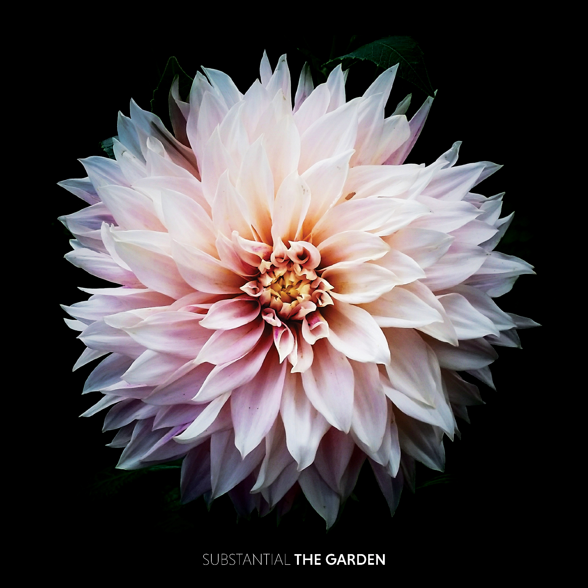TheGarden-Final-loweres.jpg