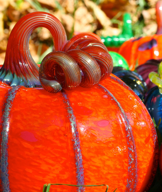 DON'T MISSTHE SARATOGA GLASS PUMPKIN PATCH!September 14 & 15 - ALL PROCEEDS BENEFIT OPERA SARATOGA'S EDUCATION PROGRAMS