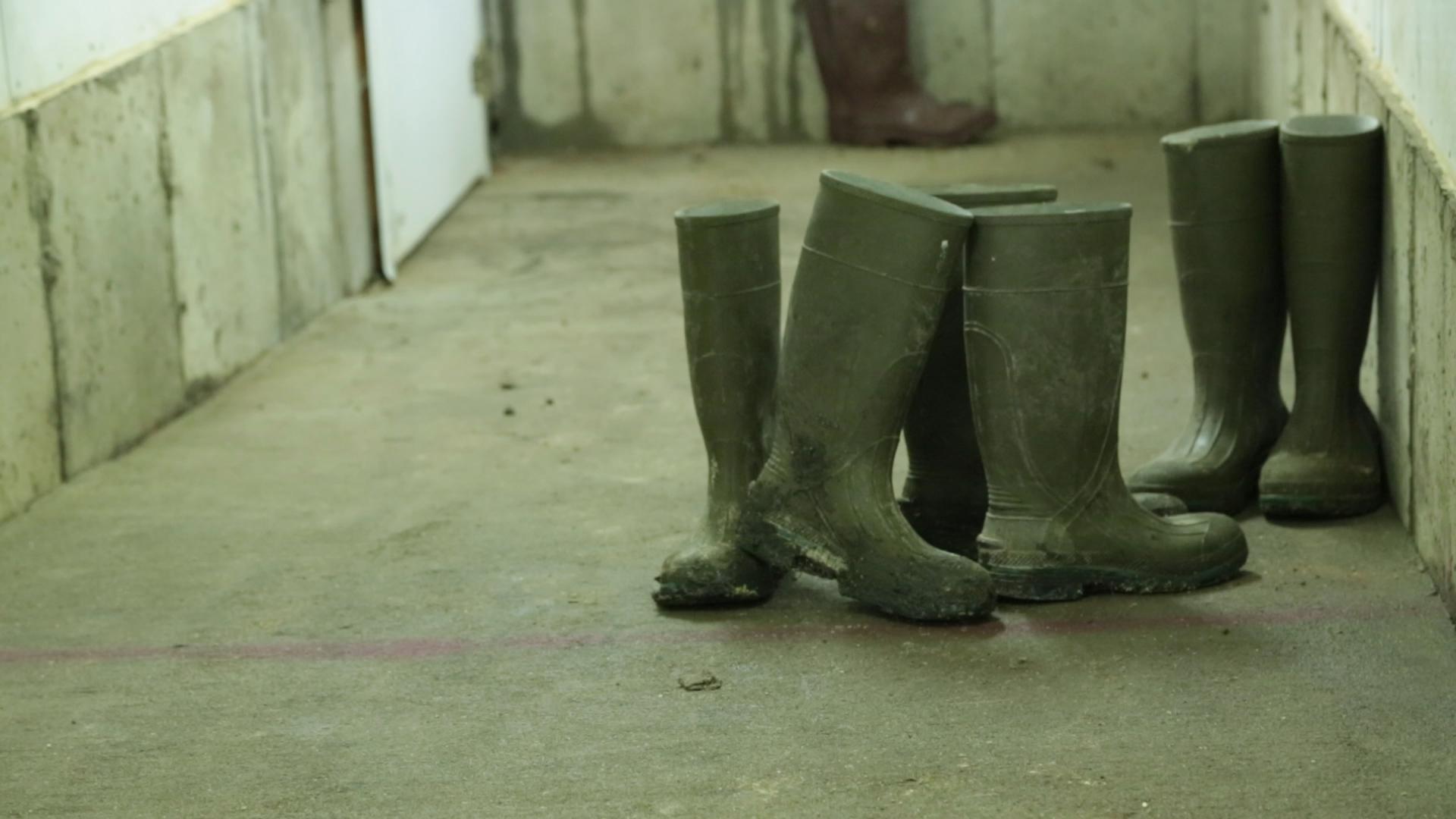 Shoe Wash.Still001.jpg