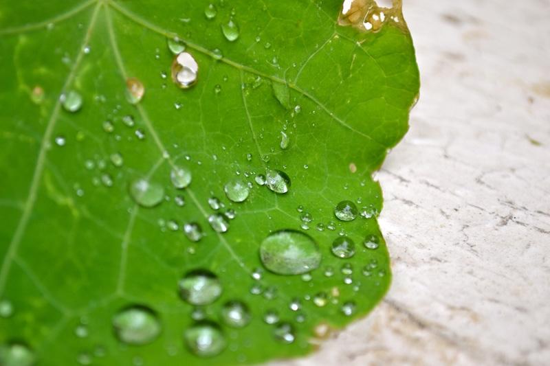 Water Drops_1.jpg