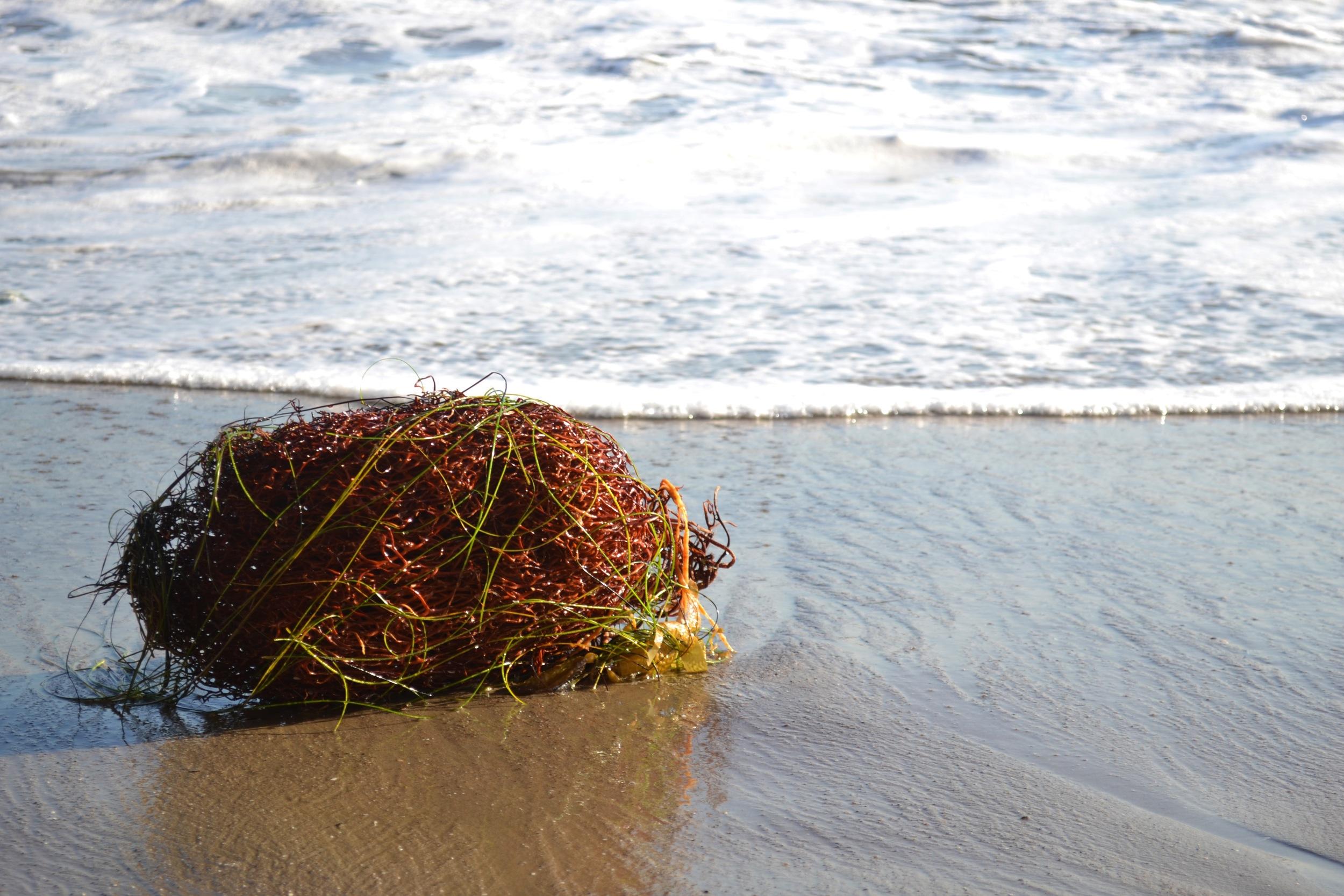 Seaweed Tumbleweed.jpg