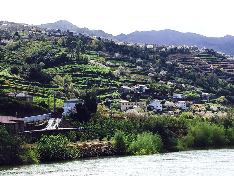 Douro river valley where all of the worlds port wines are from...