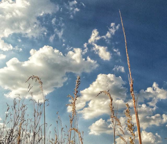 7HAIBUN DCLVII - tall grass - Copy.jpeg