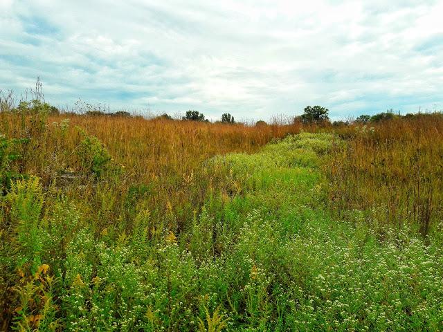 HAIBUN DCLVII ~ landscape.jpeg - Copy.jpg