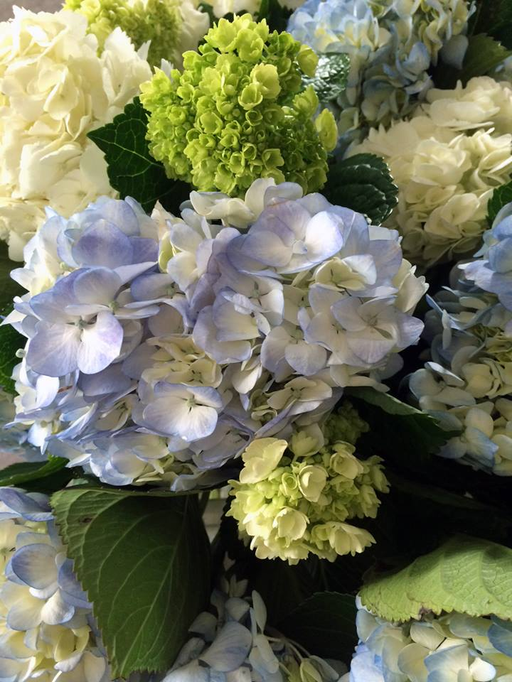 This week's wrap bouquet is a fan favorite back by popular demand! Three billowy and oh-so-fluffy stems of hydrangea in white, blue, & green. Call us at 218-728-1455 to reserve.