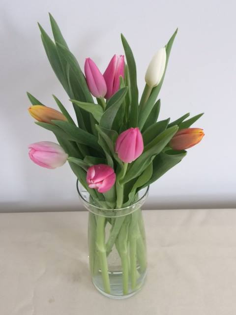 Tulip season has arrived and what better way to celebrate than to snag one of our $10 weekly wrap bouquet specials! This week we are featuring a 10-stem bundle of rainbow Dutch tulips. Call us at 218-728-1455 to reserve!