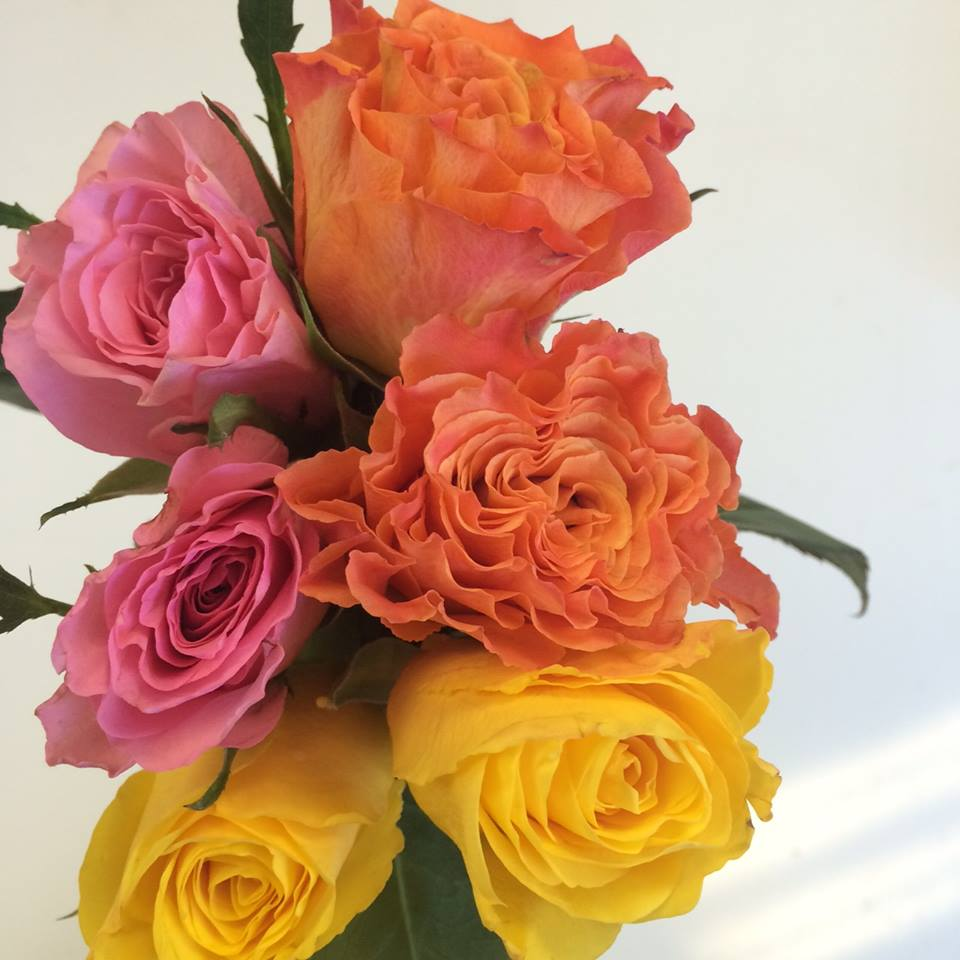 This week we are featuring Dutch garden-style sweetheart roses! You will receive two coral peach, two bubblegum pink, and two lemon meringue roses (6 total stems of these exceedingly lovely blooms) for just $10!  Call us at 218-728-1455to reserve a bouquet or two. Also, please specify what day you would intend to swing by the shop for pick-up. This week the wraps are available to be picked up Wednesday-Saturday!