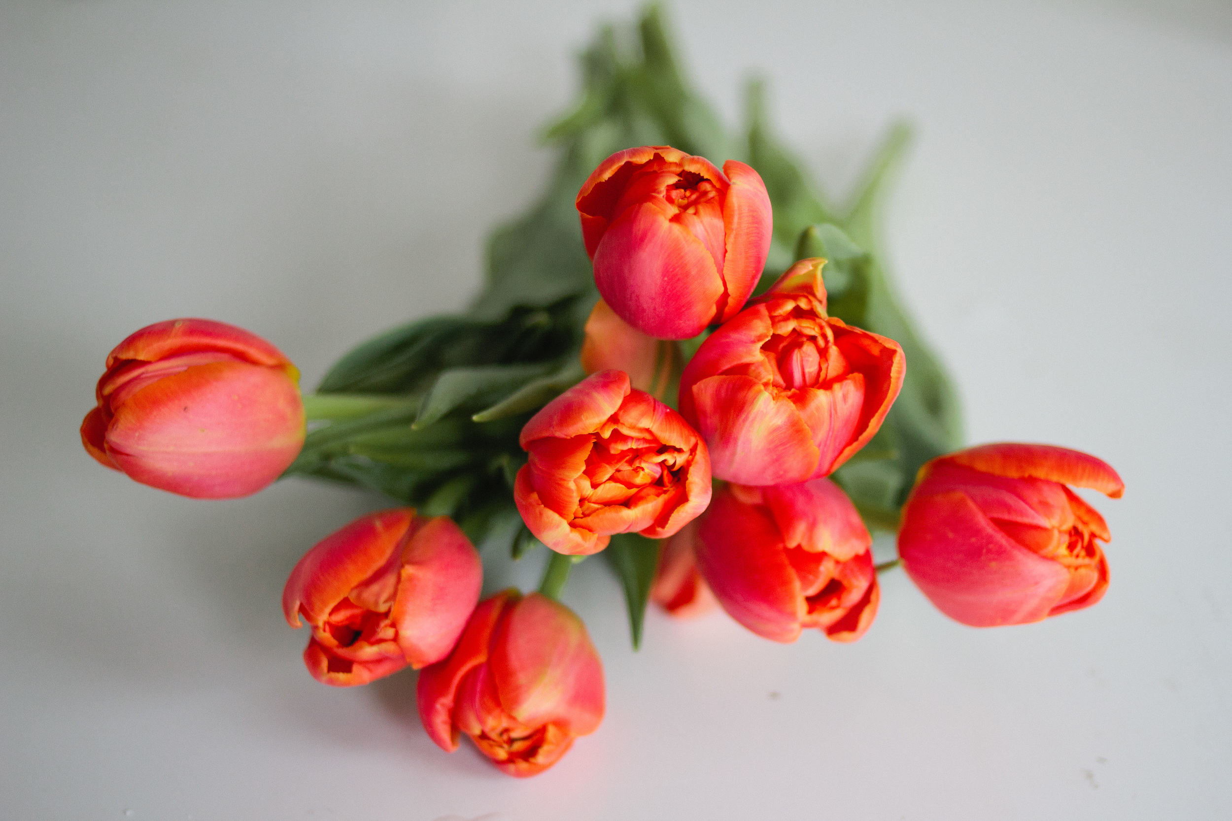 Tulips are wonderfully easy to care for - no need to cut the stems, justensure that any foliage below the water line is removed. Then, simplychange the water as needed and voila - a long-lasting symbol of spring to be enjoyed everyday (at least until tulip season ends)!