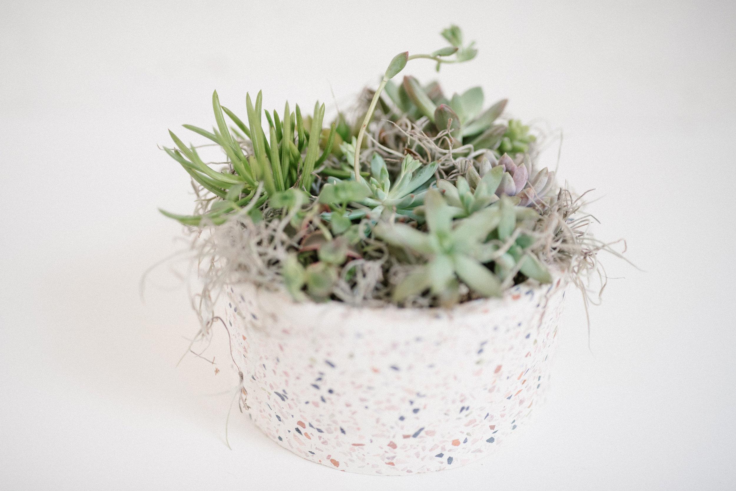 Terrazzo Succulent Planter