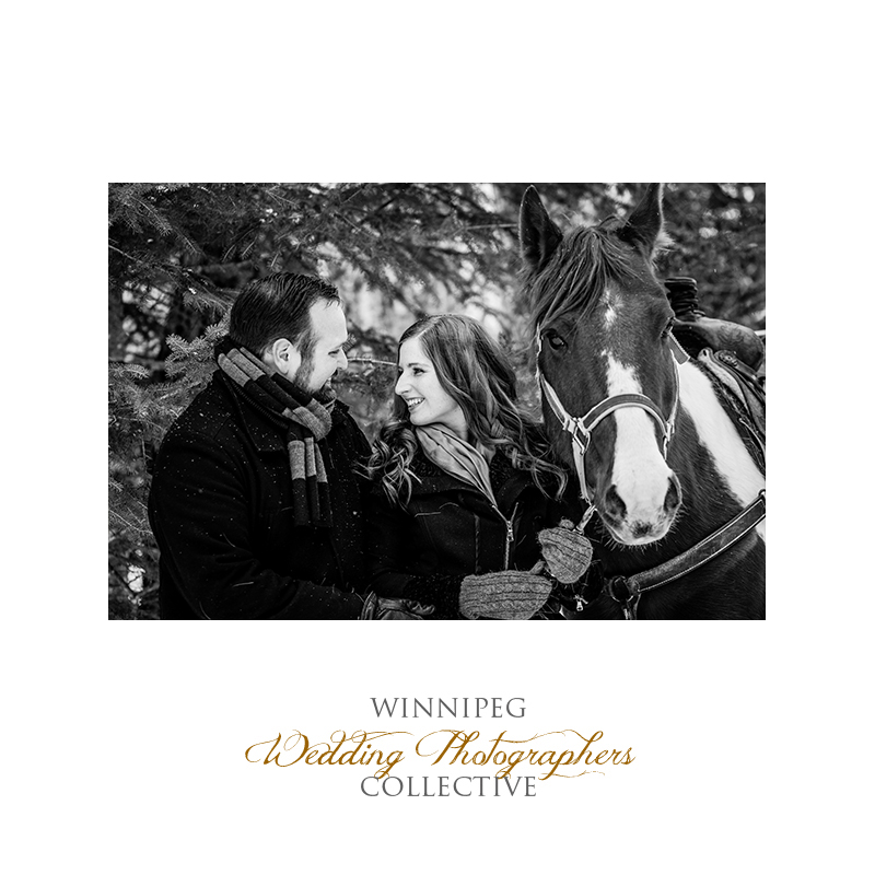 Winter Engagement with Horses001.jpg