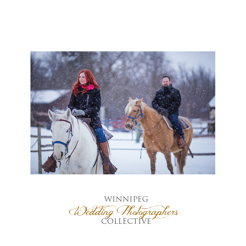 Winter Engagement with Horses003.jpg