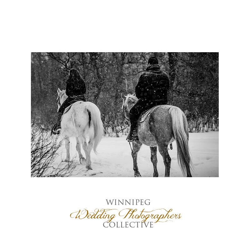 Winter Engagement with Horses004.jpg