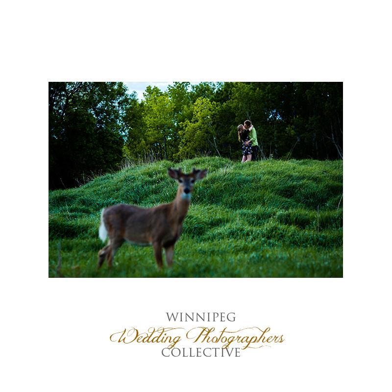 Assiniboine Forest Engagement Photo