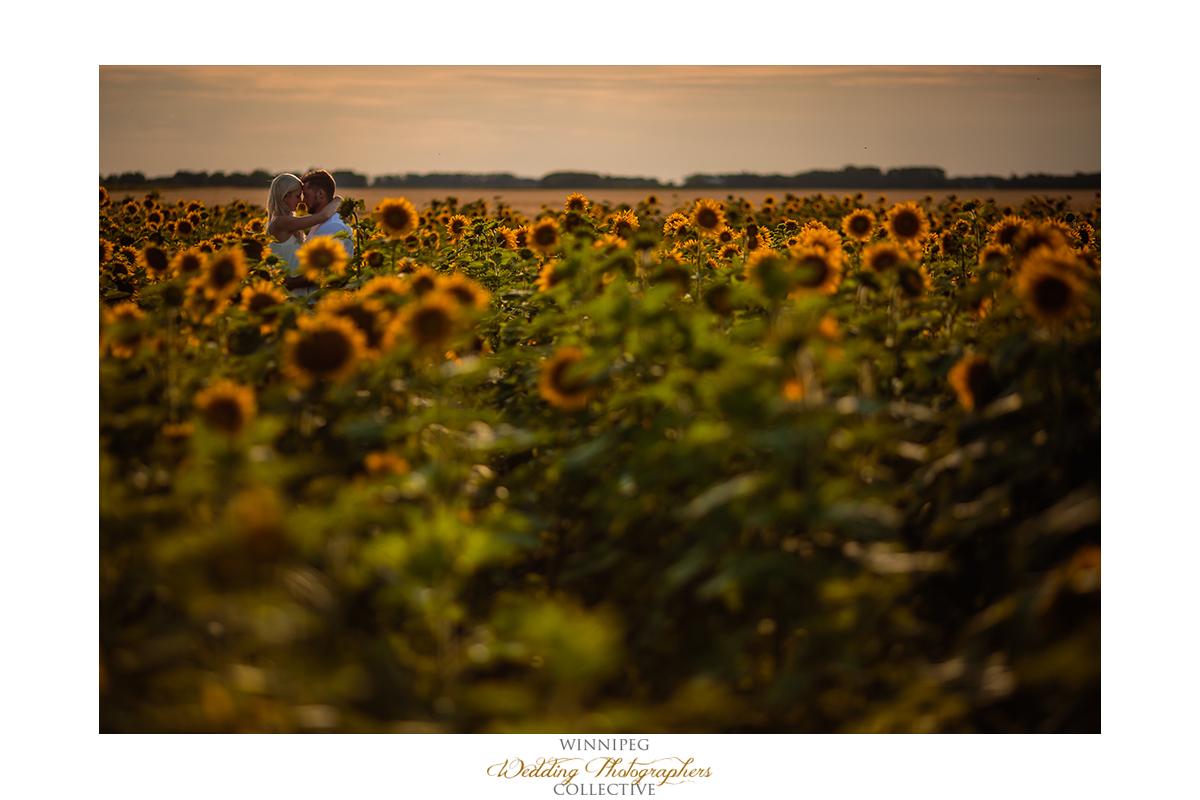 Engagement photos in sunflower field
