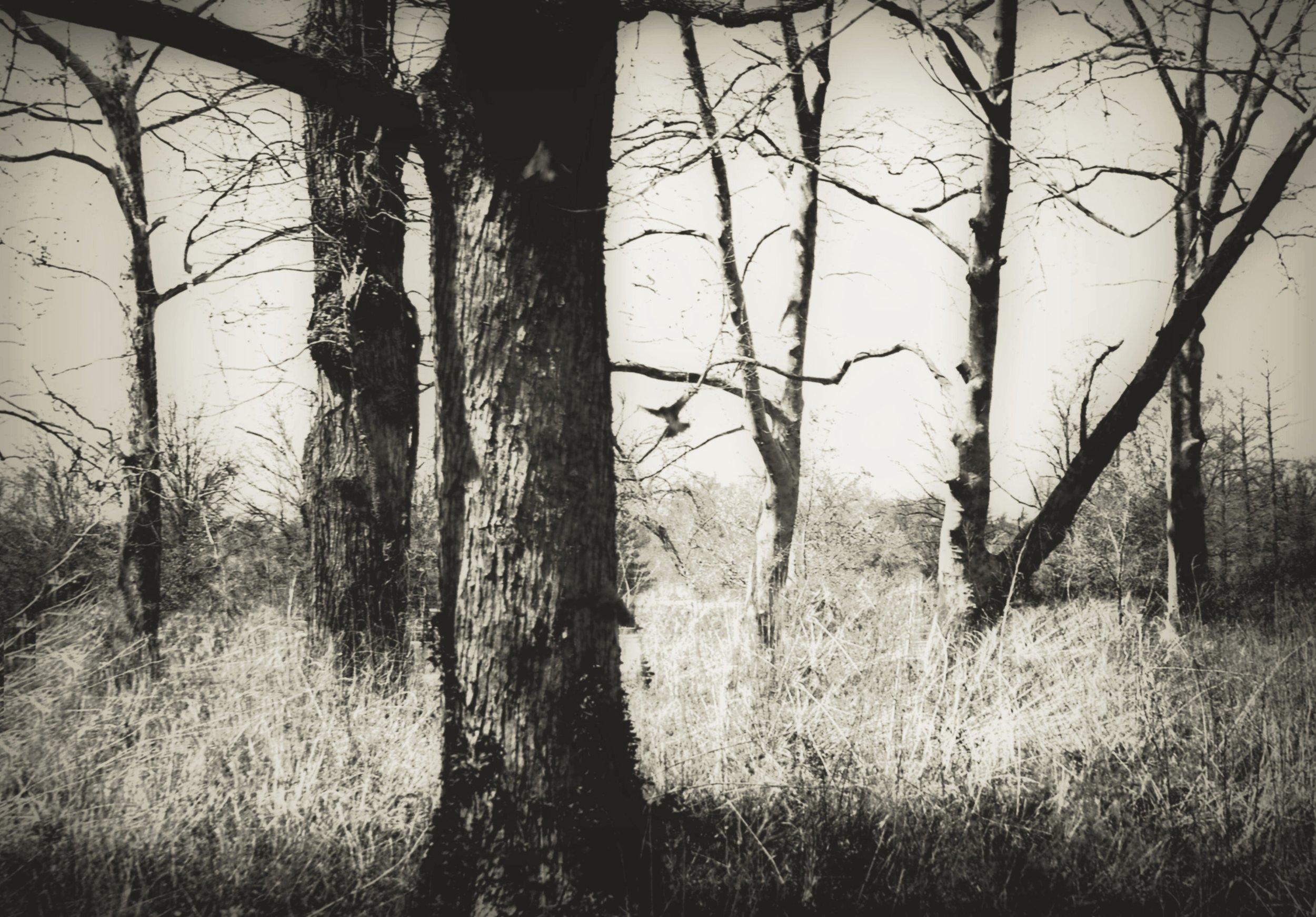 Bird Among Trees, John Blair