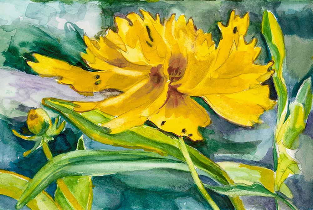 Tickweed, Linda Green-Metzer
