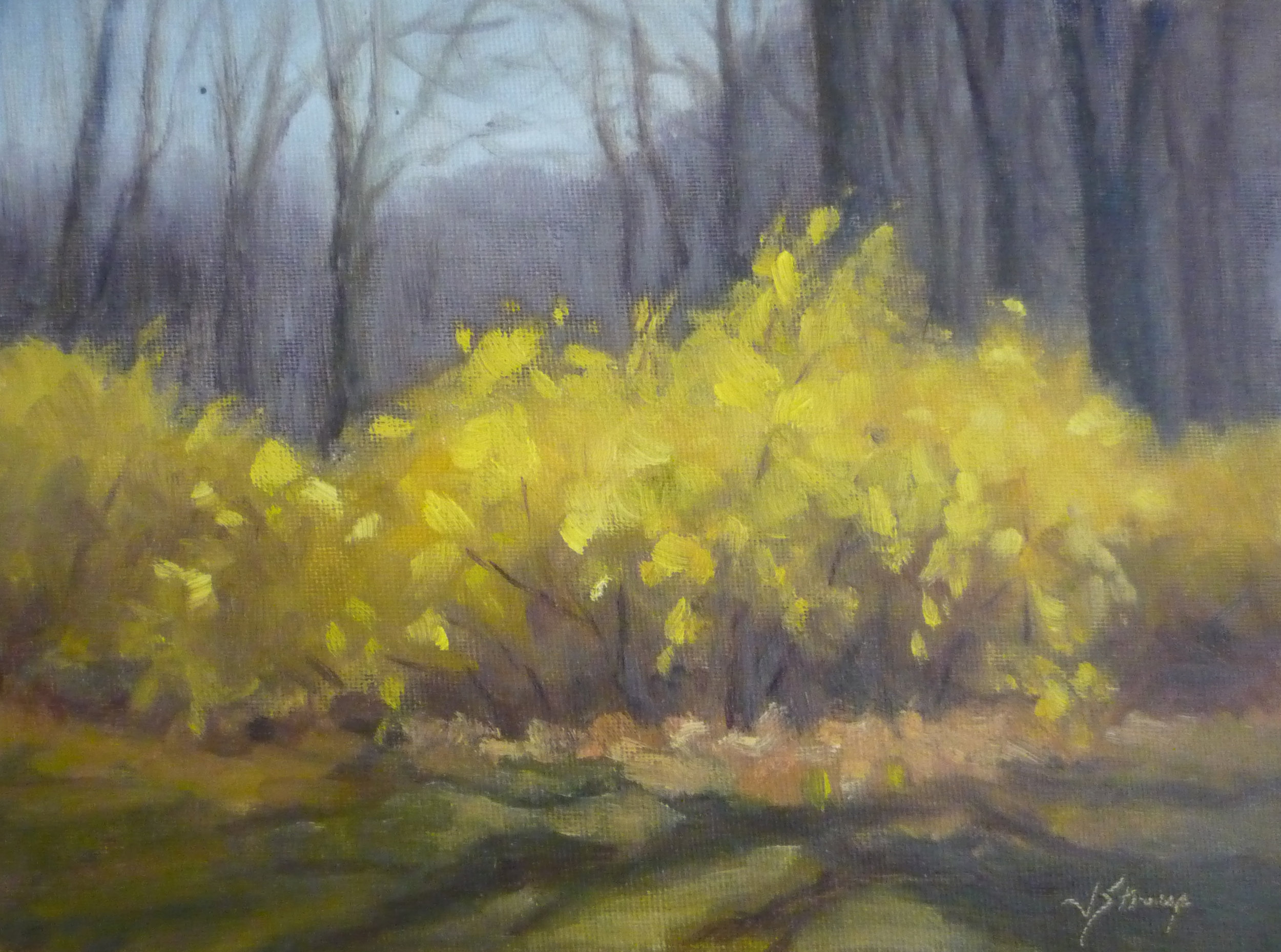 First Forsythia, Judy Stroup