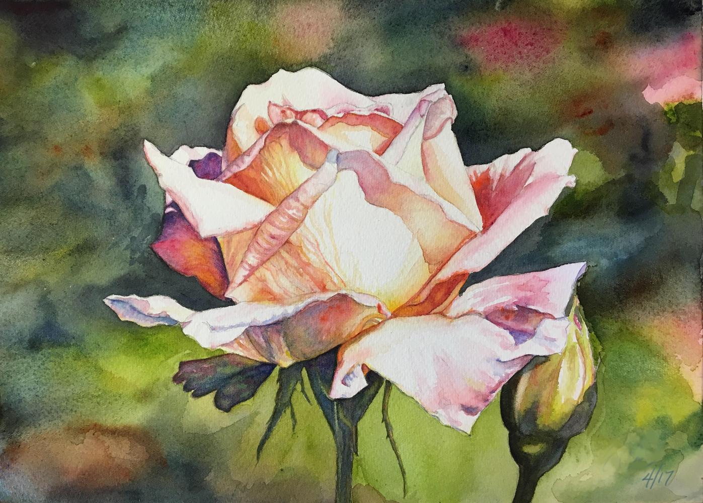 Erin Blumer, Judy's Rose