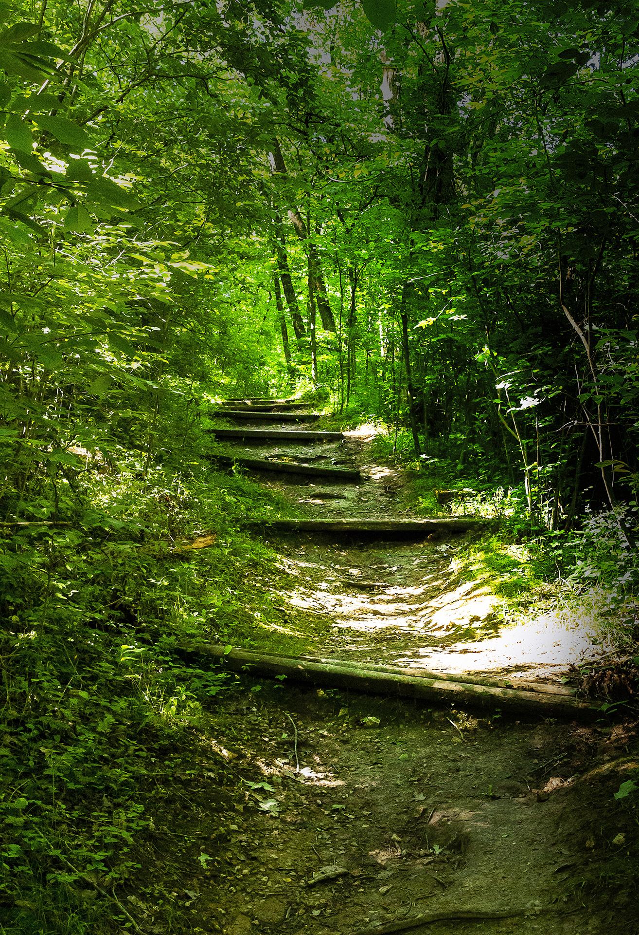 Robert Bolla, Forest Path