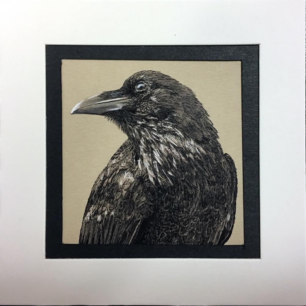 Crow study #2, Chris Mouser
