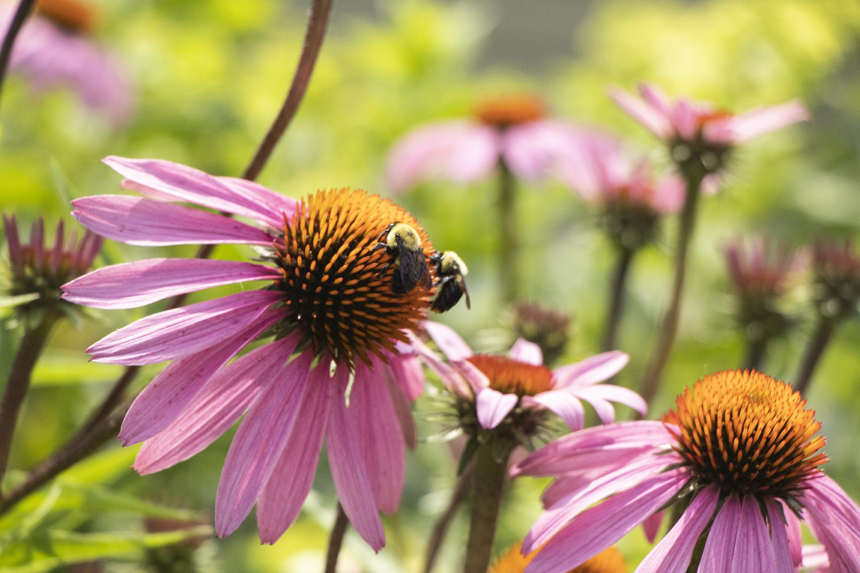Bumblebees, Thea Stockmann