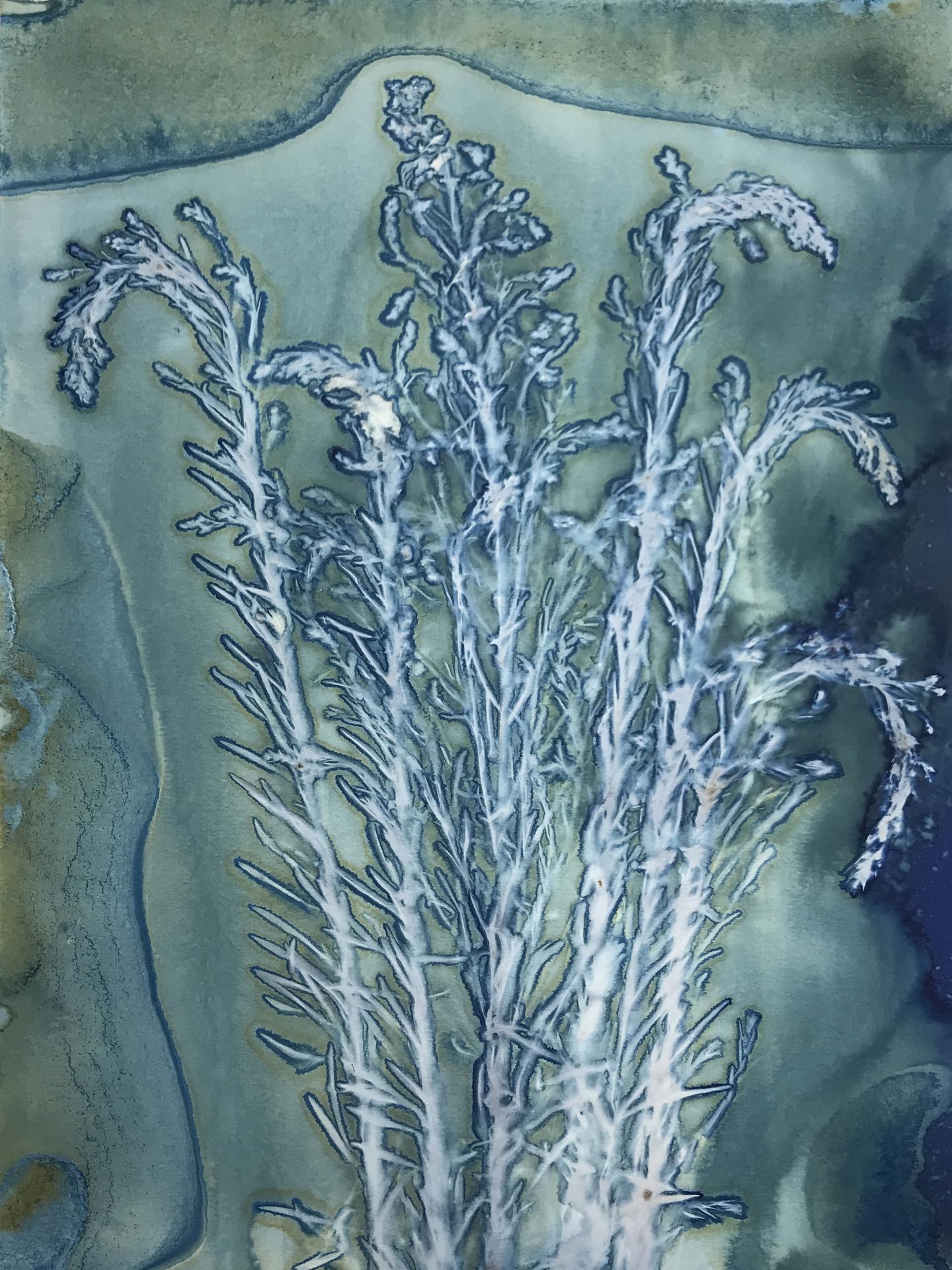 Prarie Plant from the Sandhills of Nebraska, Jody Boyer