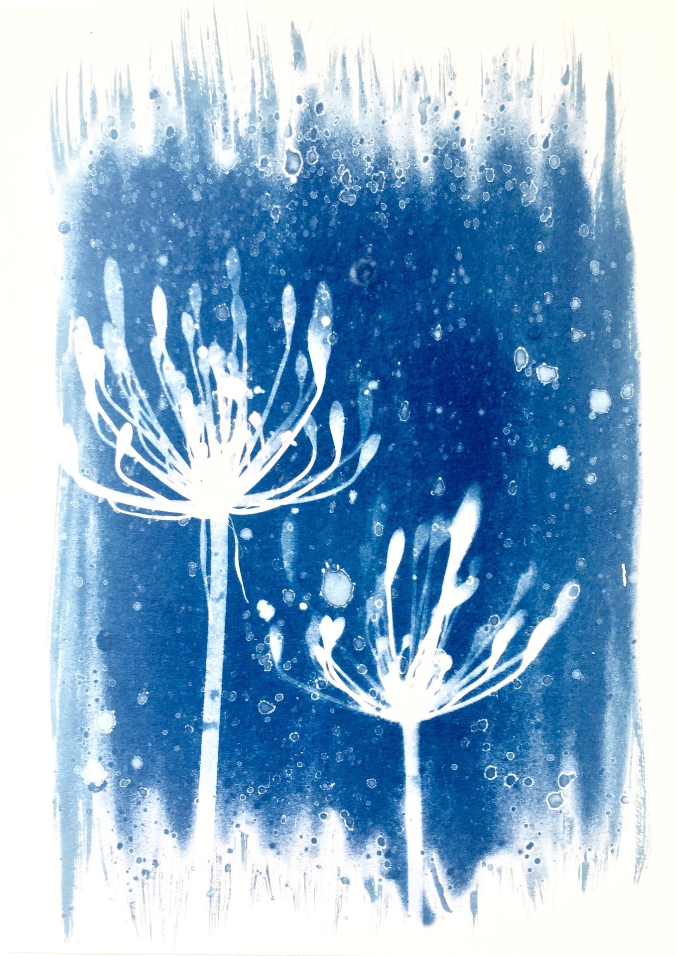Midnight Summer Garden, Christine So