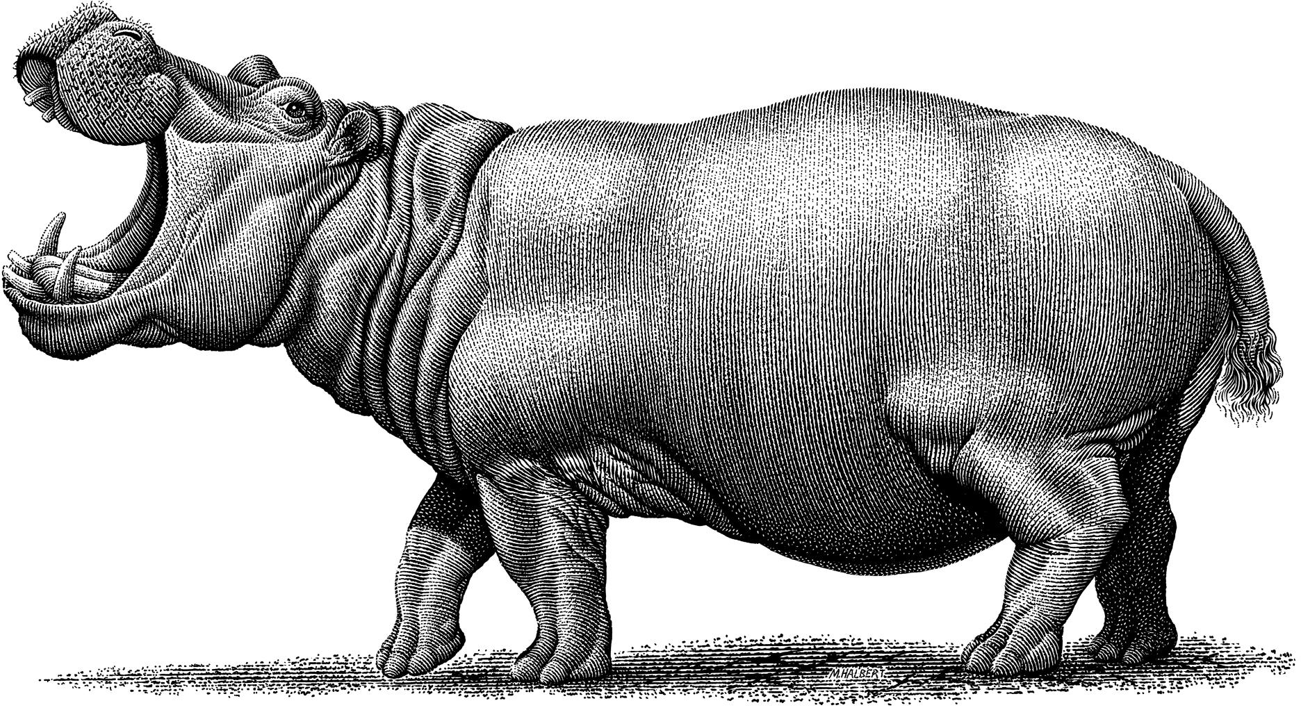 Happy Hippo, Michael Halbert
