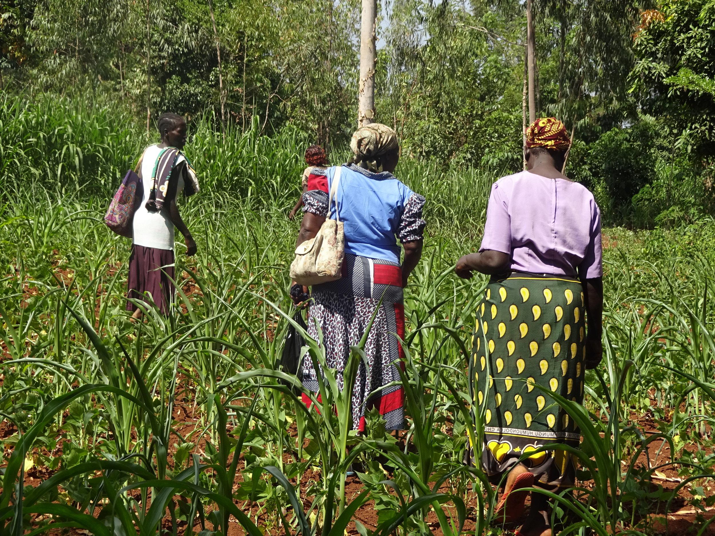 Women Headed to the Farm