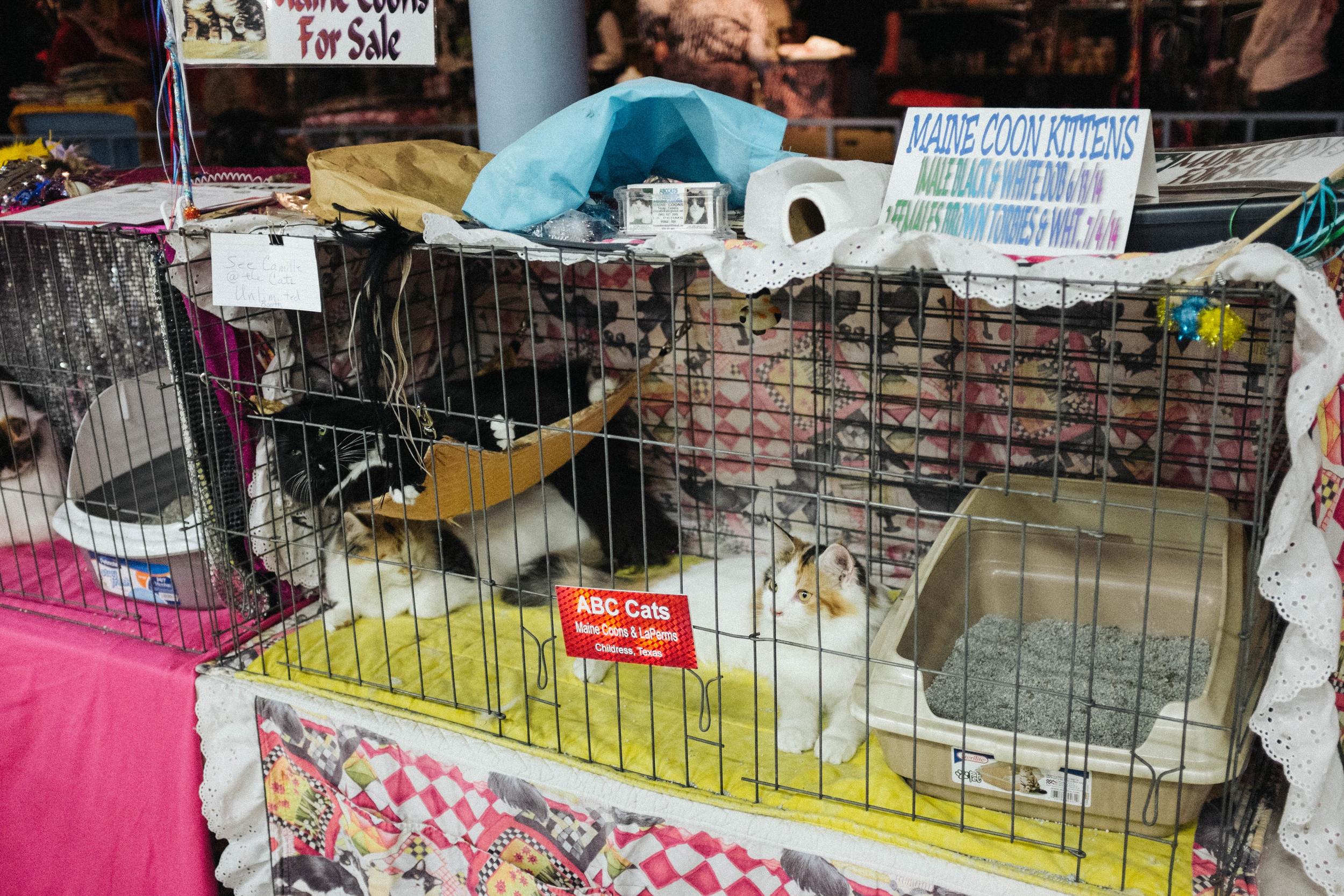 WICHITA CAT SHOW_2015-6.jpg