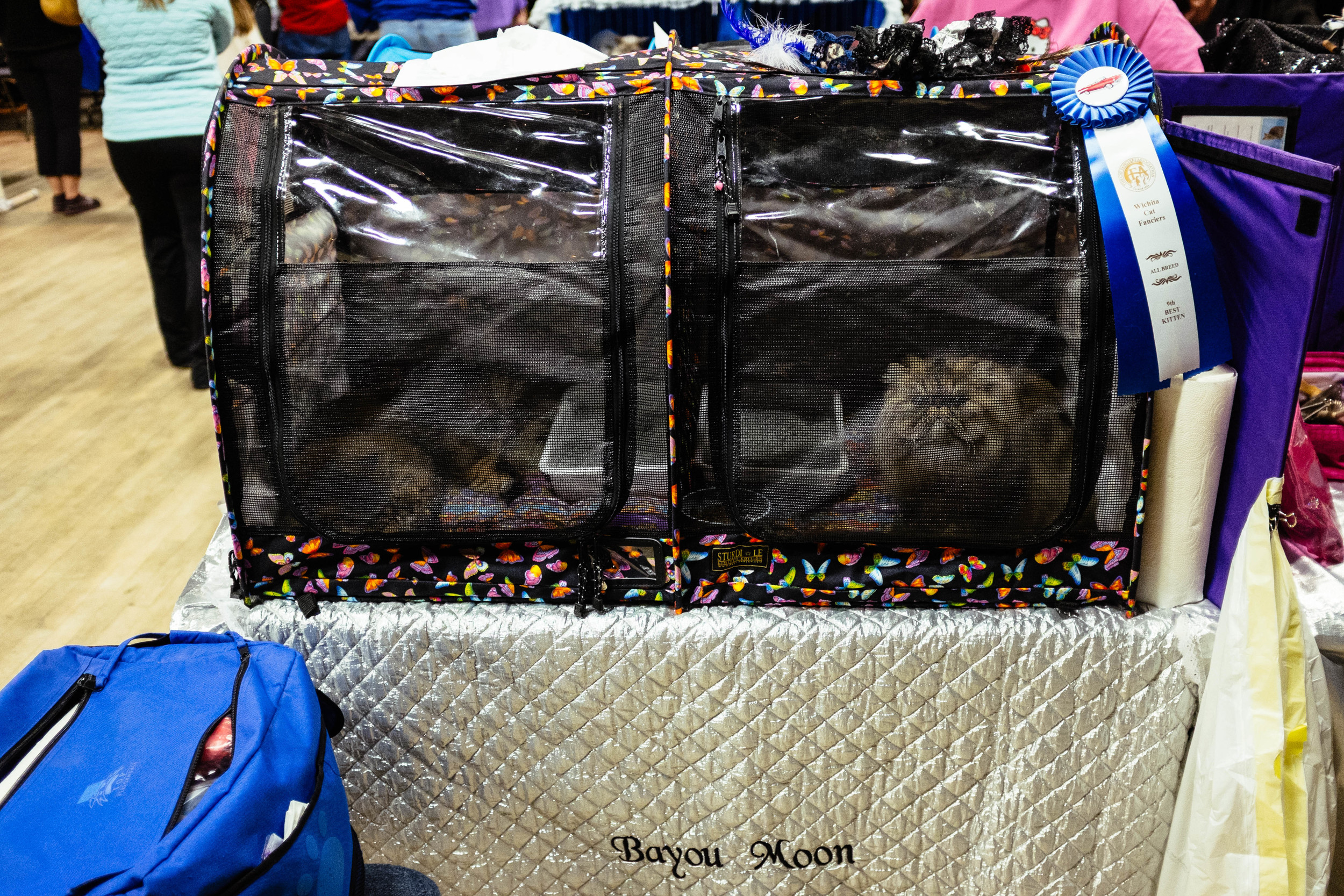 WICHITA CAT SHOW_2015-13.jpg