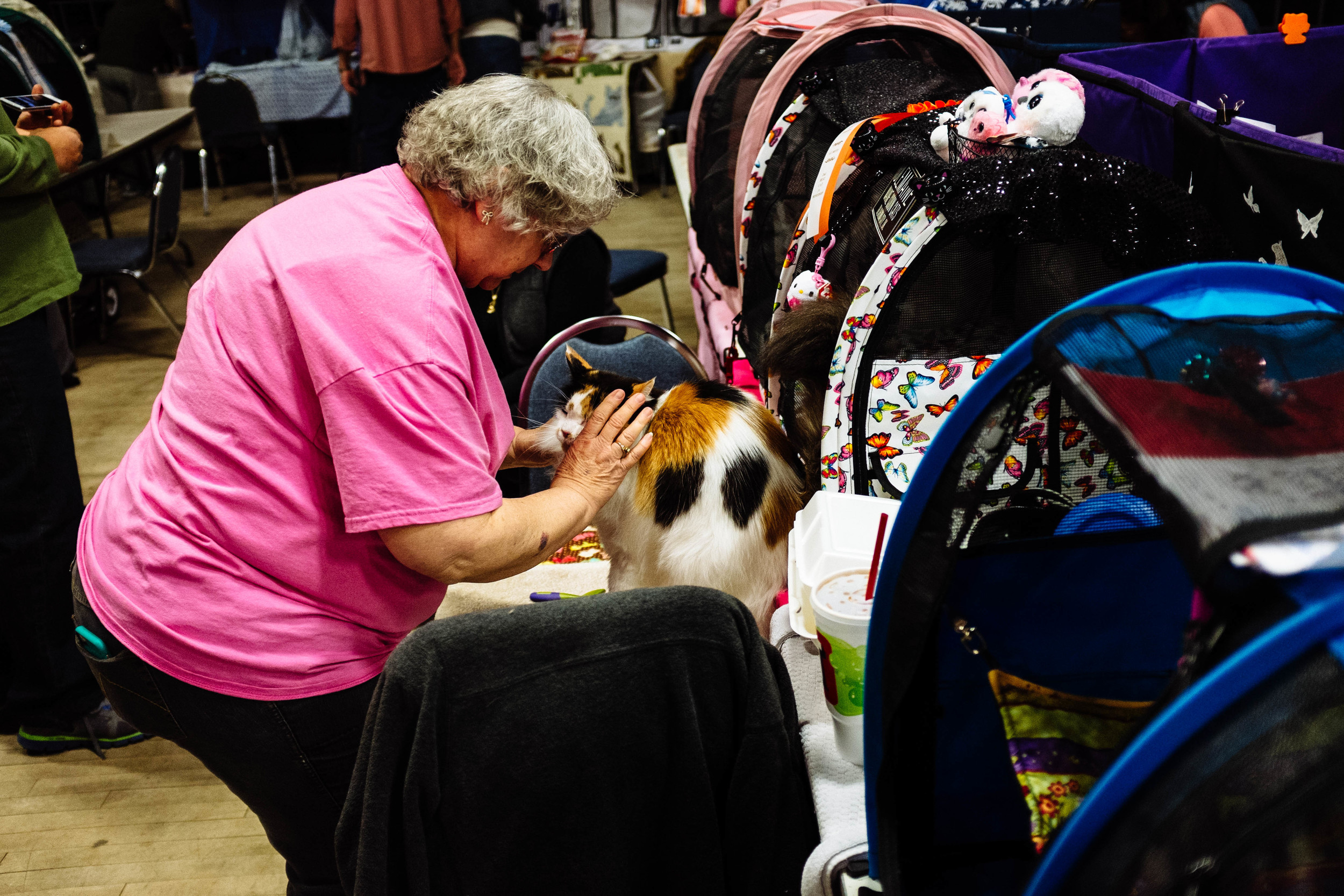 a lady prepping her cat for the show.