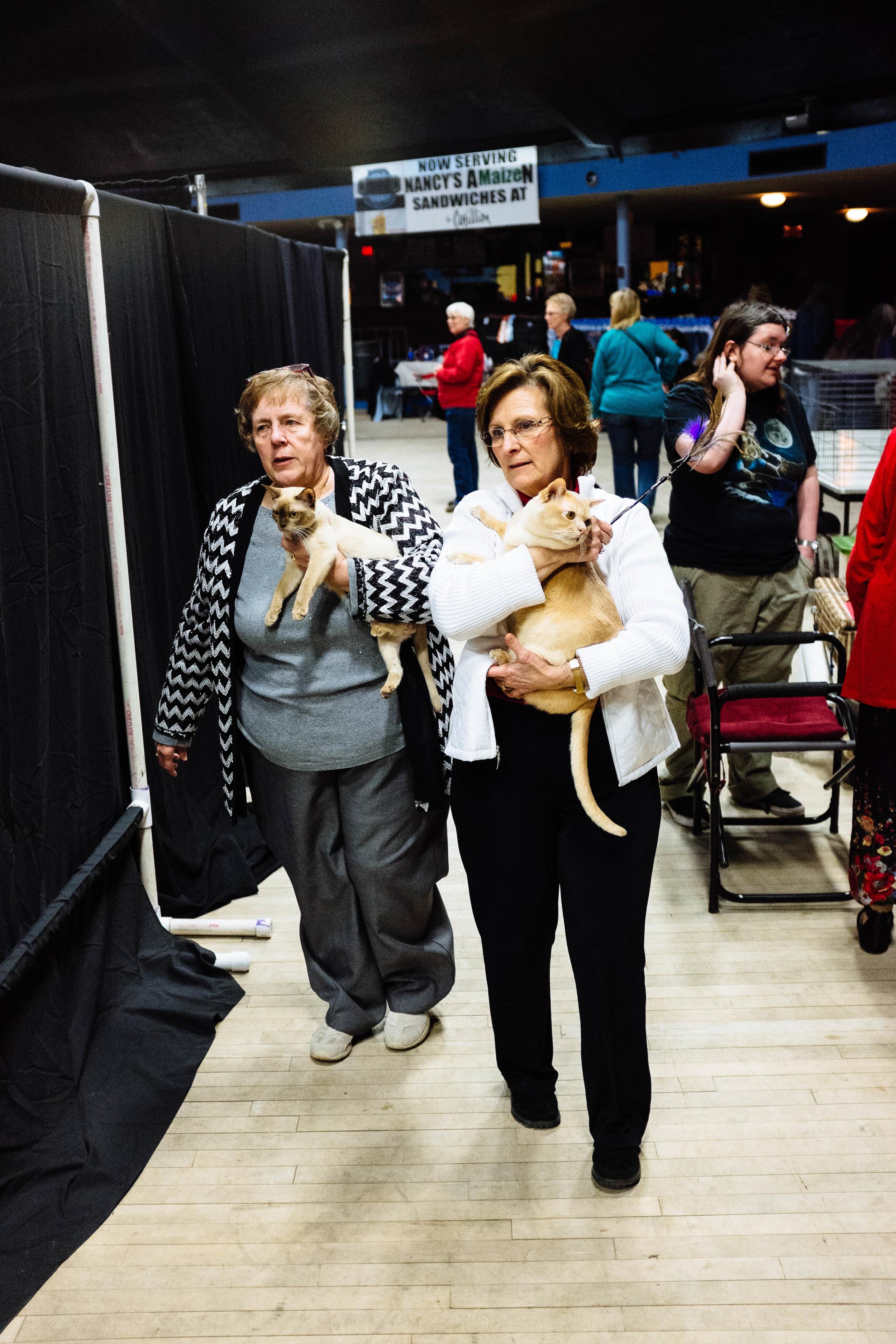 WICHITA CAT SHOW_2015-21.jpg