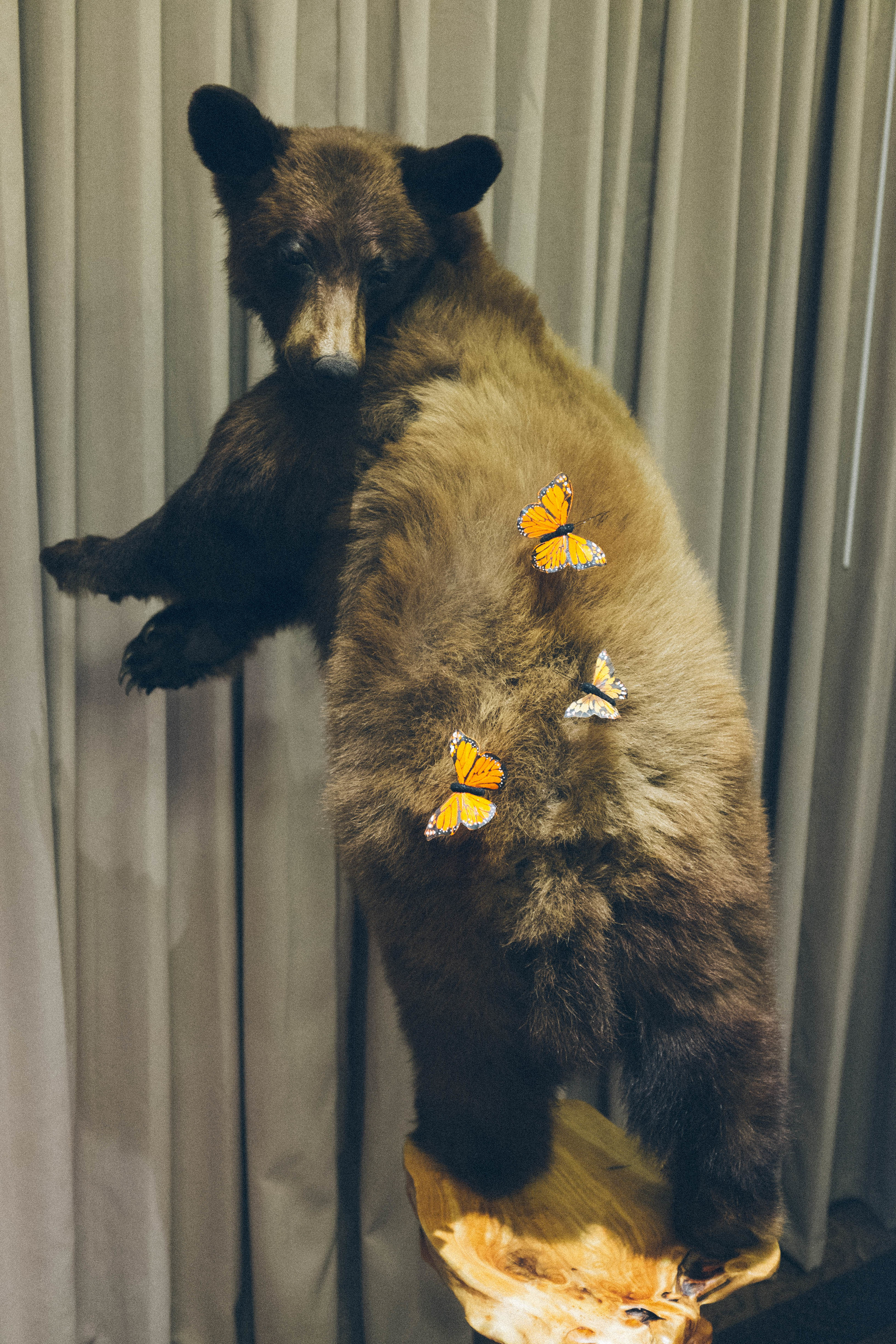 A bear frolicking with butterflies on its back? A bit of a hard sale.